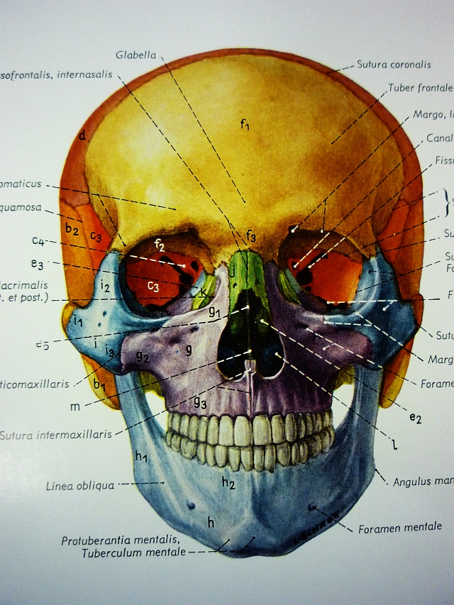 Human Anatomy Head Neck The Unravelling Of Al Cook