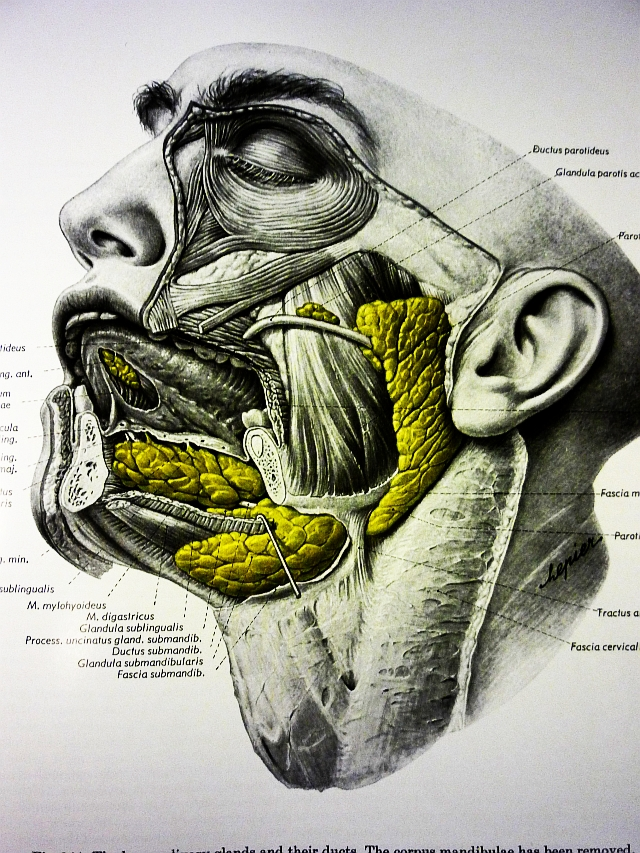Human Anatomy: Head & Neck. | The Unravelling Of Al Cook...
